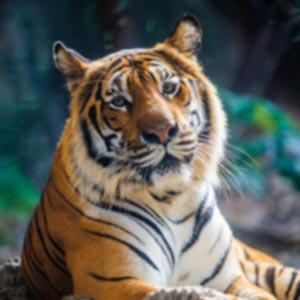 https://www.cortassa.it/wp-content/uploads/2020/11/tigre.jpg